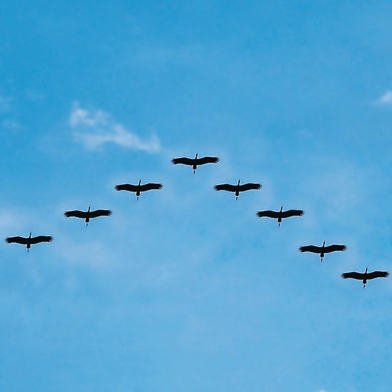 Flying Vs